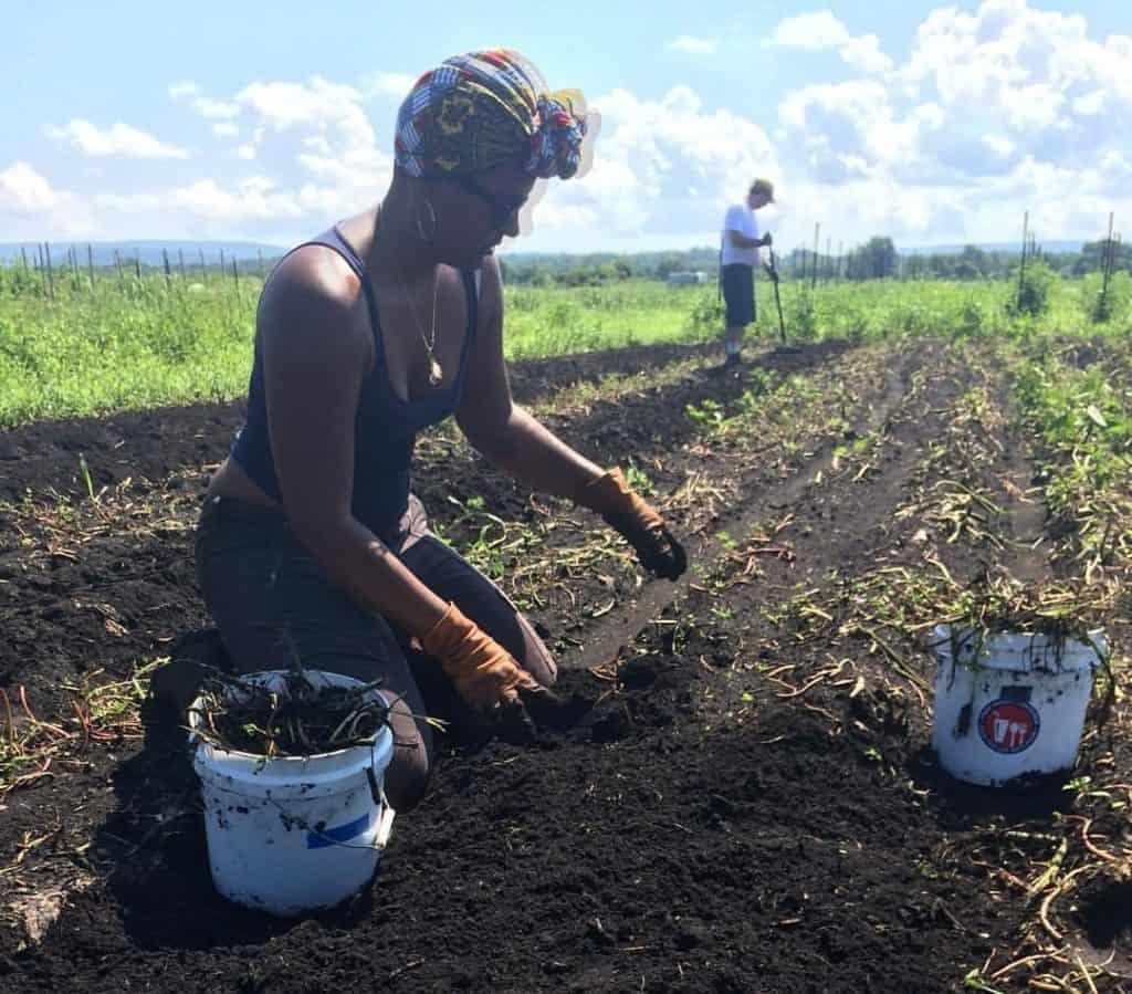 Ysanet volunteering at Rise & Root Farm